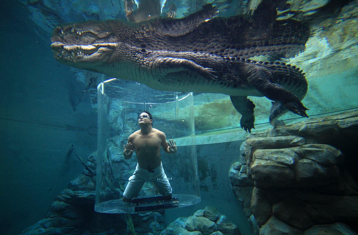 Australiassa voi uida krokotiilien kanssa