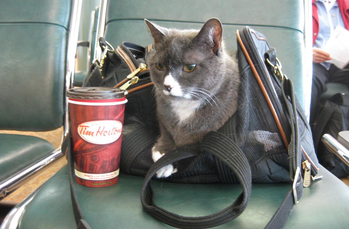 Kissan kanssa matkalle