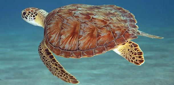 Curacao sopii sukeltajille