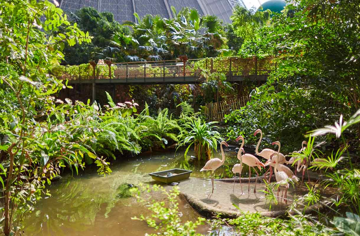 Tropical Islands on ympärivuotinen tropiikki.