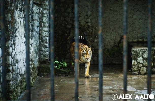 Surabayan eläintarha