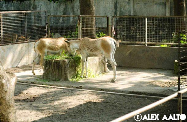 Syrabayan eläintarha