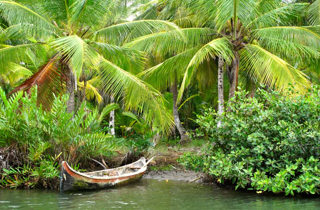 Panaman viidakko