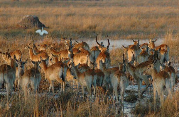 Sambia-Antiloopit-Flickr-Saparevo
