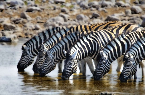 Zimbabwe-seepra-Flickr-Aftab-Uzzaman