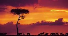 Gnuut Keniassa