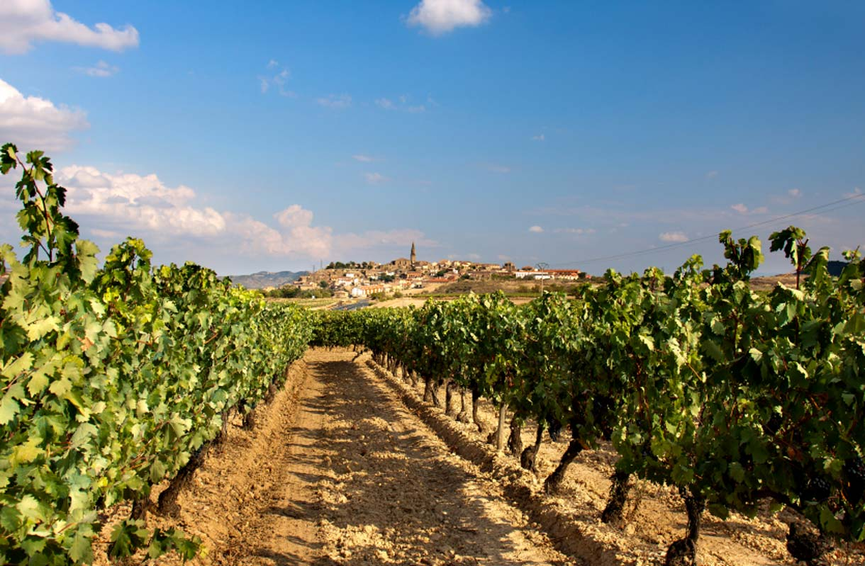 Rioja Altan viinitie Espanjassa