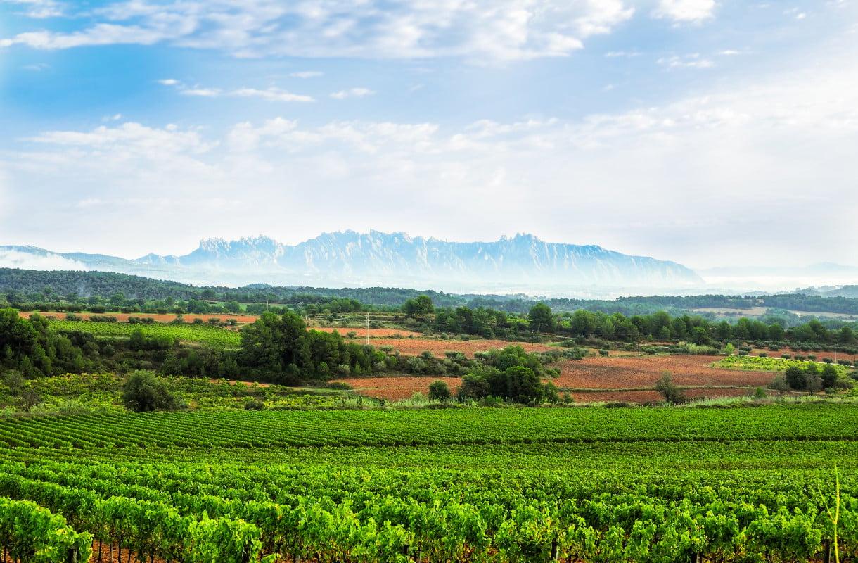 Espanjan viinireitit