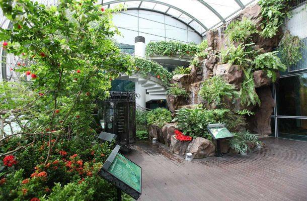 Välilaskun aikana voi rentoutua lukuisissa puutarhoissa. Kentällä on muun muassa perhospuutarha, auringonkukkapuutarha ja orkideatarha.
