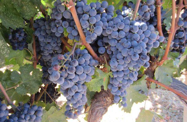 Viinitila Kreetalla