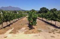 Viinitila, Stellenbosch