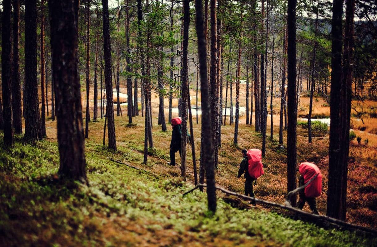 Suomen suosituimmat kansallispuistot