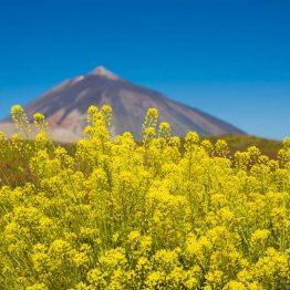 Tulivuori Teide