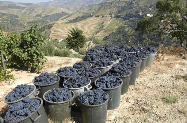 Douron laakso tunnetaan viinituotannosta