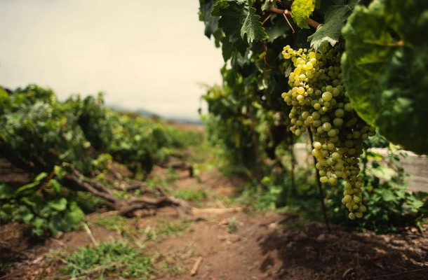 Teneriffalla voi nauttia paikallista viiniä