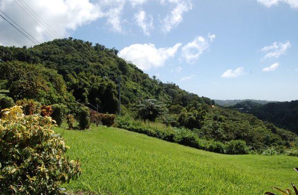 Vehreä Tobago