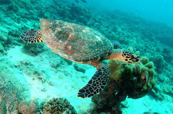 Sukellusloma Seychelleillä