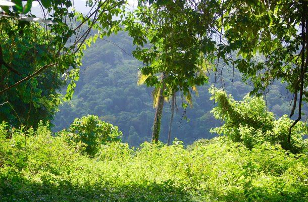 Vehreää sademetsää