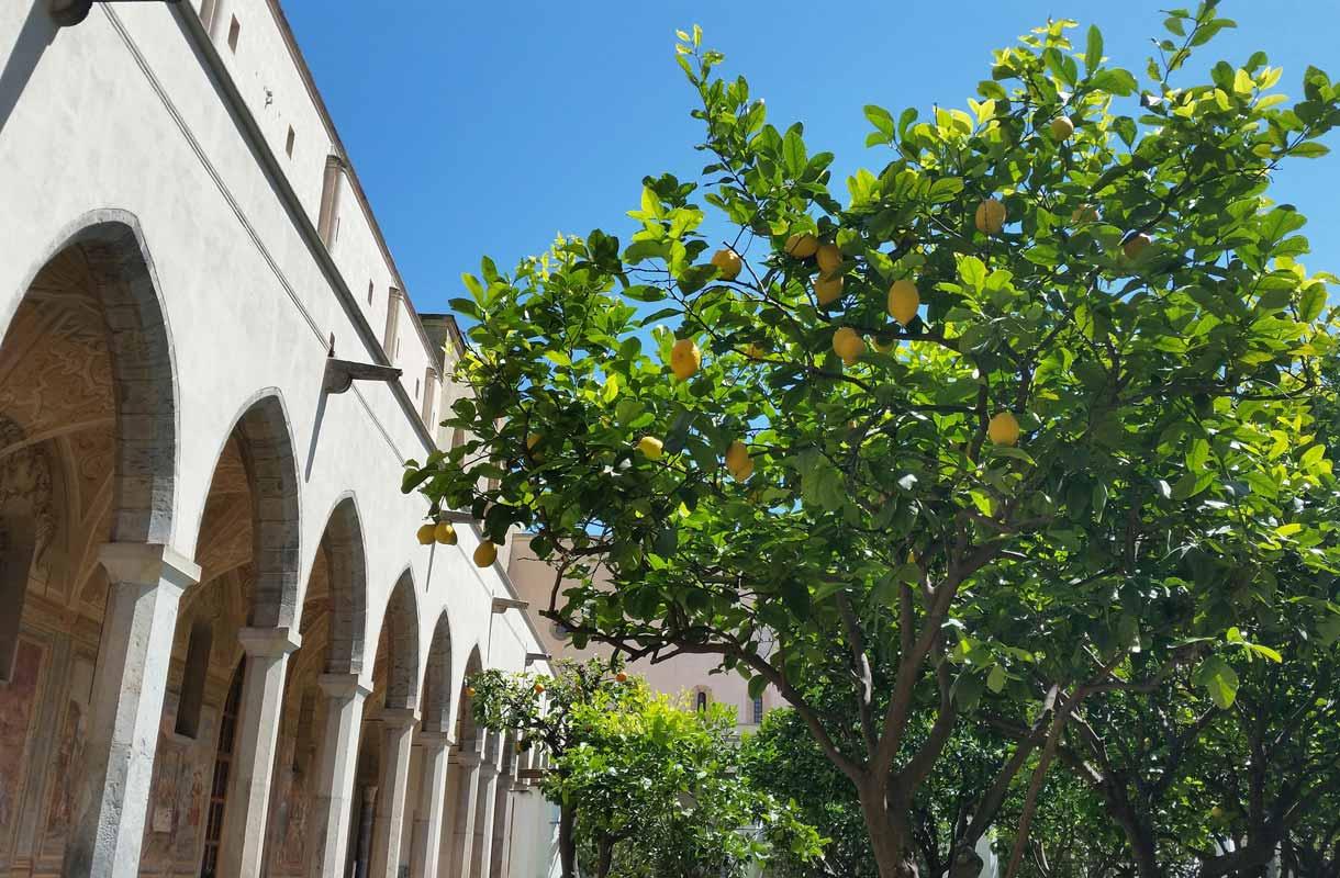 Sitruunapuu täydessä hedelmässä Napolissa.