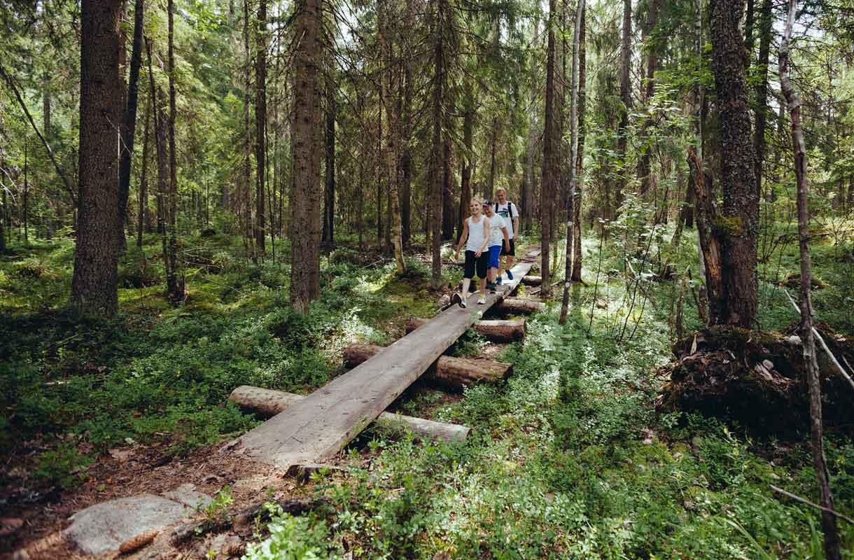 Kouvolan Repoveden kansallispuistosta löytyy eri pituisia reittejä retkeilijöille.