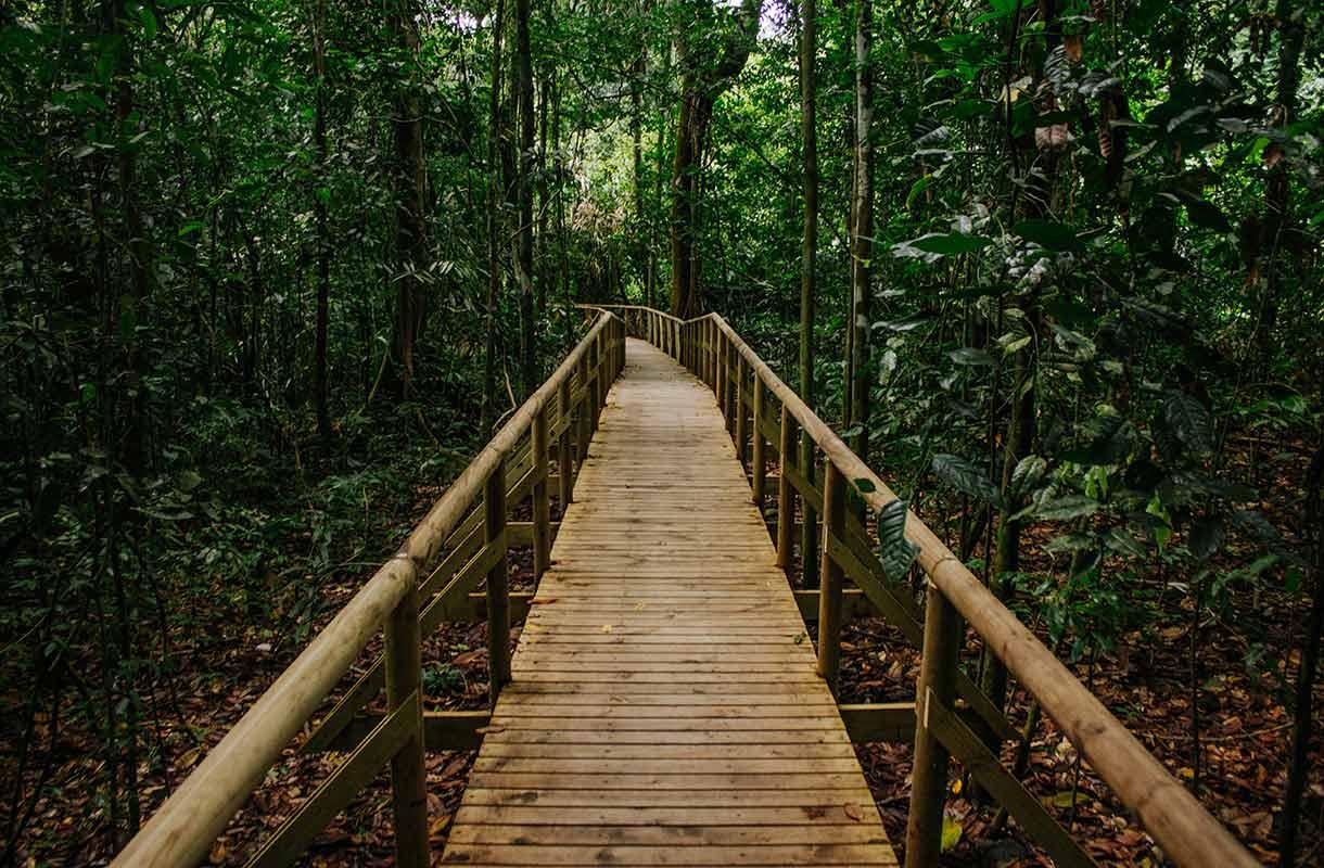 Metsä Costa Ricassa