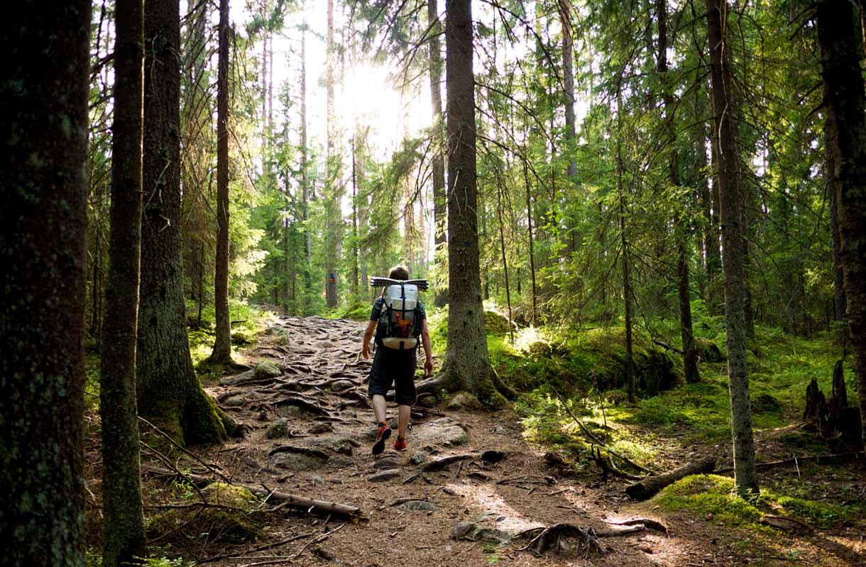 Espoon Nuuksiossa voi kokeilla Forest Escape -seikkailua