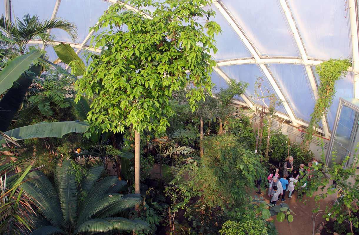 Kööpenhaminan kasvitieteelliseen puutarhaan on ilmainen sisäänpääsy.
