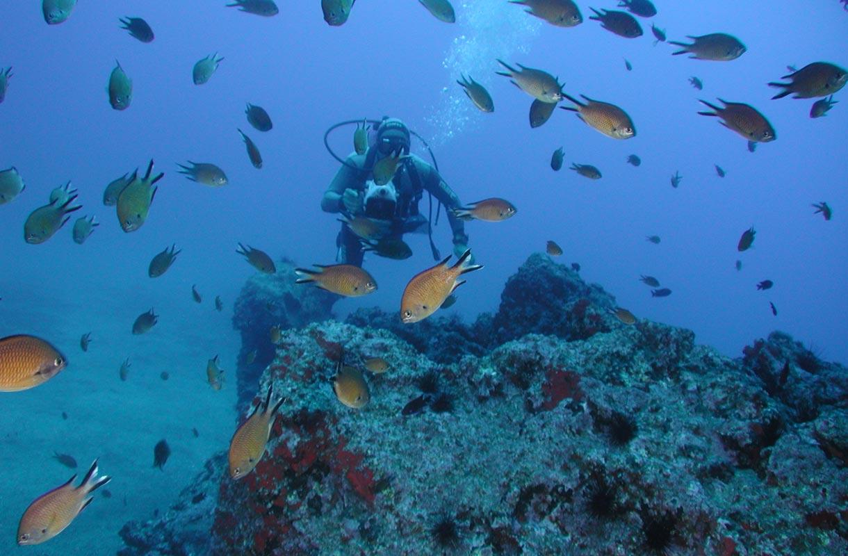 Madeiralla on tarjolla monia vesiaktiviteetteja.