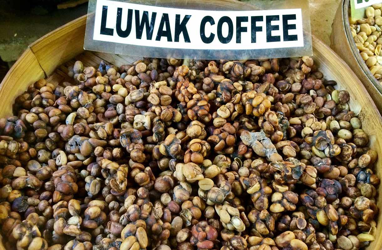 Kopi Luwak -kahvia