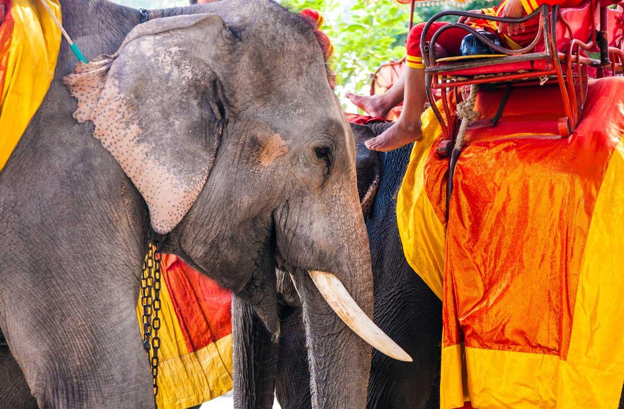 Elefanttiratsastus Thaimaassa
