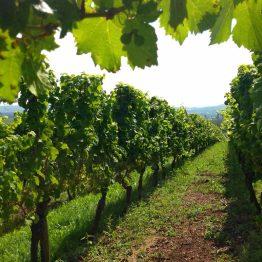 Viinirinne Rüdesheimissa