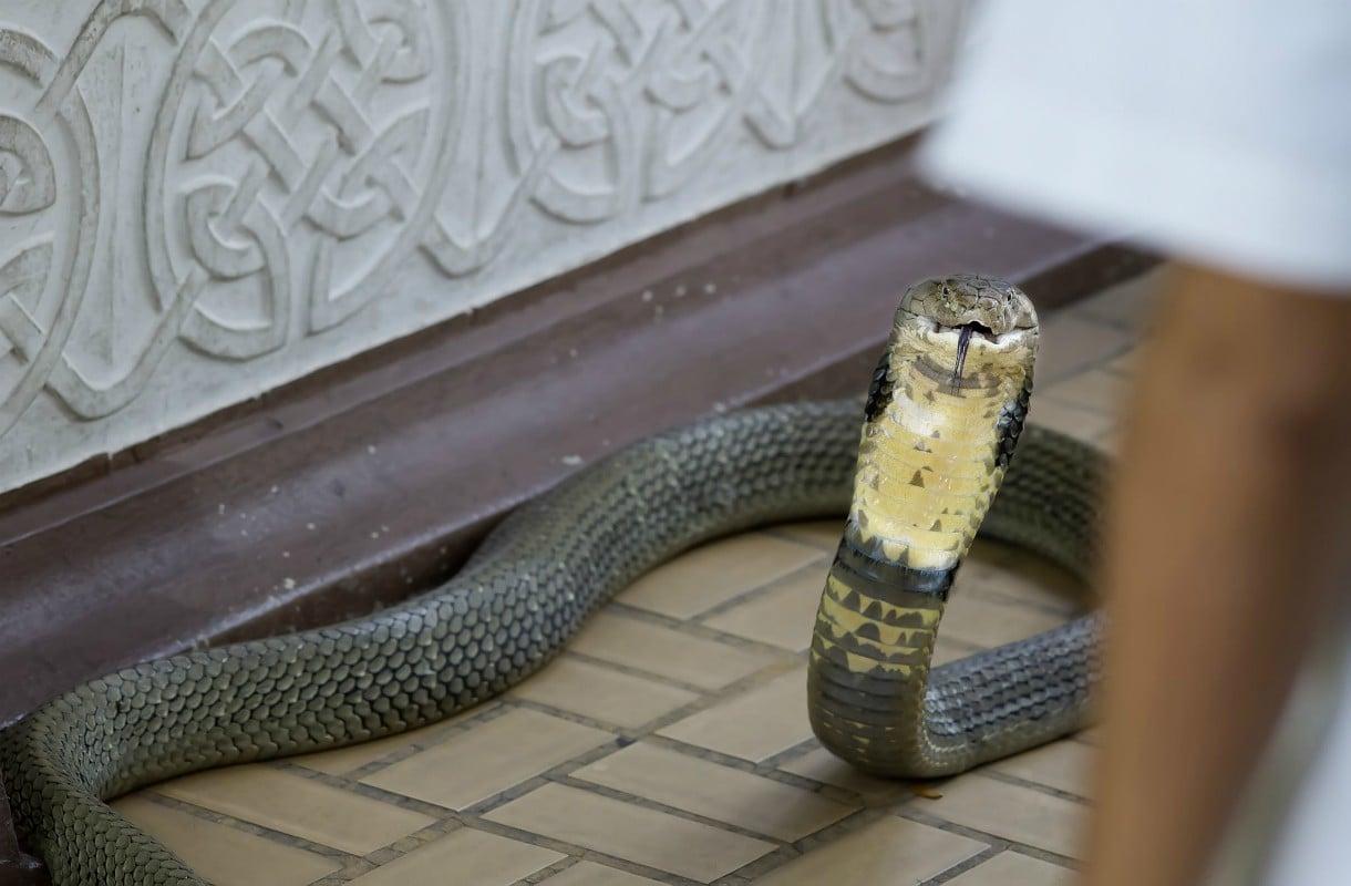 Thaimaan käärmekylä on omituinen nähtävyys