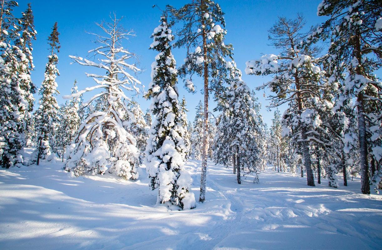 Talvi Rovaniemellä