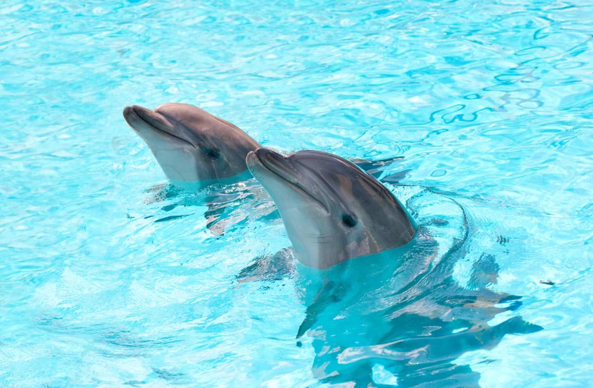 Delfiinit kärsivät turismista Balilla