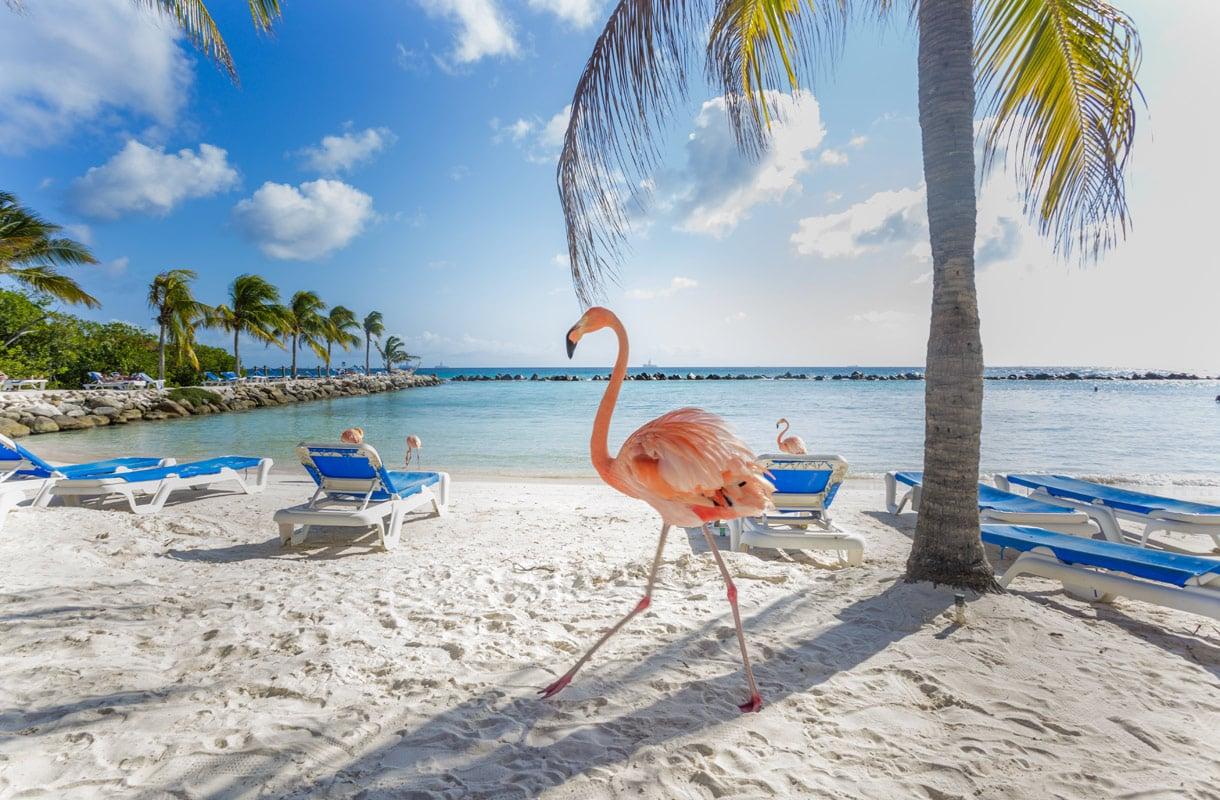 Missä nähdä flamingoja?