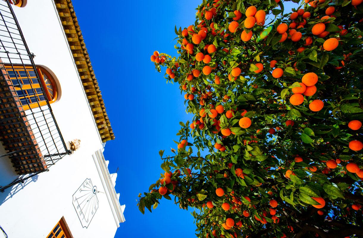 Espanjan Aurinkorannikko